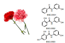 Carnation and PhytoAlexin Structure